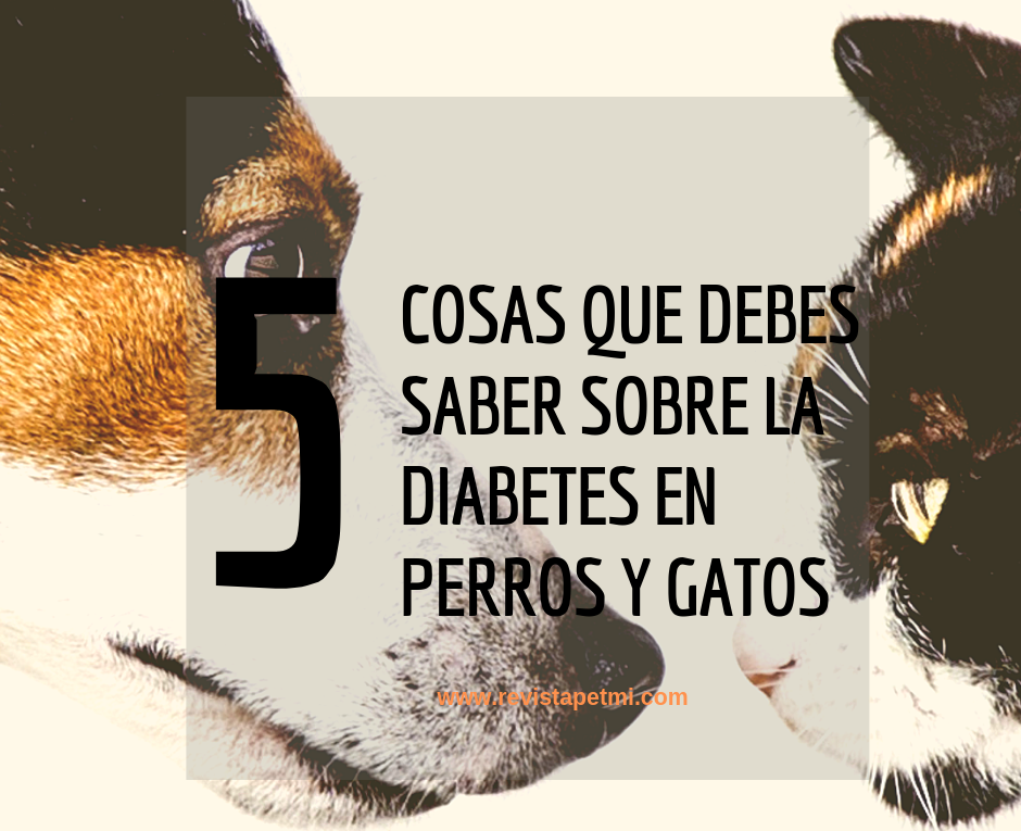 la diabetes en perros y gatos