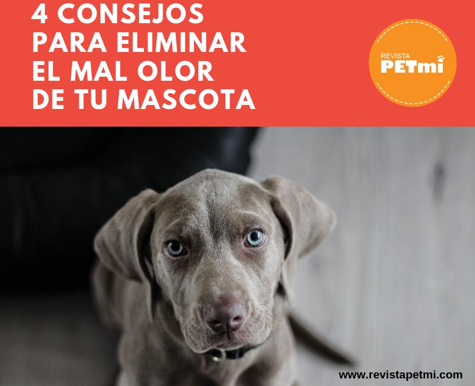 4 consejos para eliminar el mal olor de nuestras mascotas