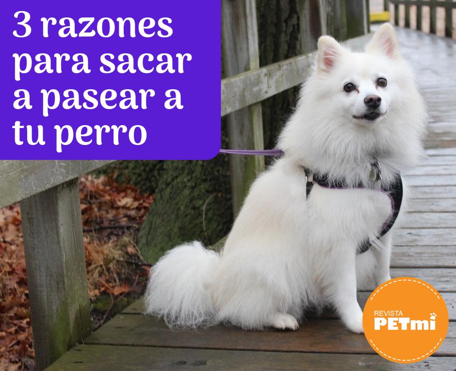 3 razones para sacar a pasear a tu perro