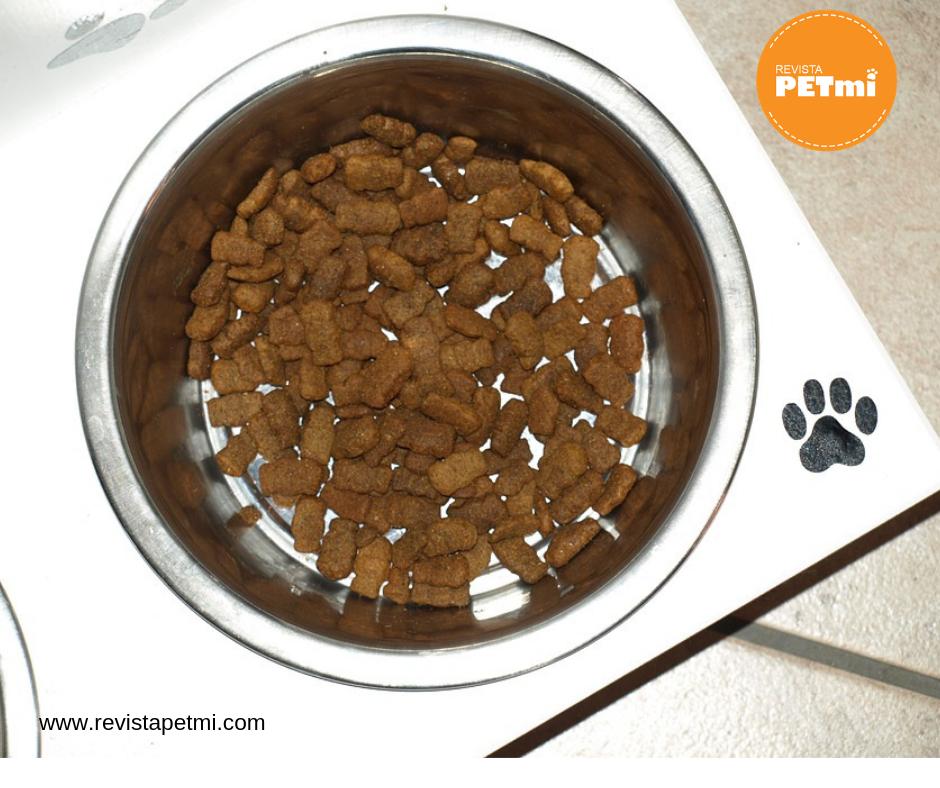 alimento para perros, los malos olores de la mascota en casa
