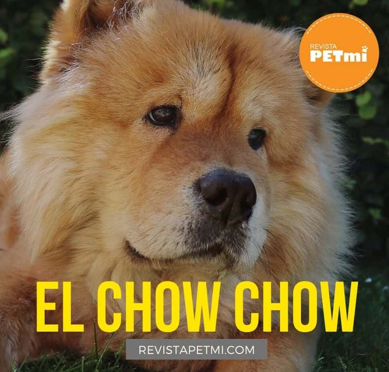 El Chow Chow (4)-min