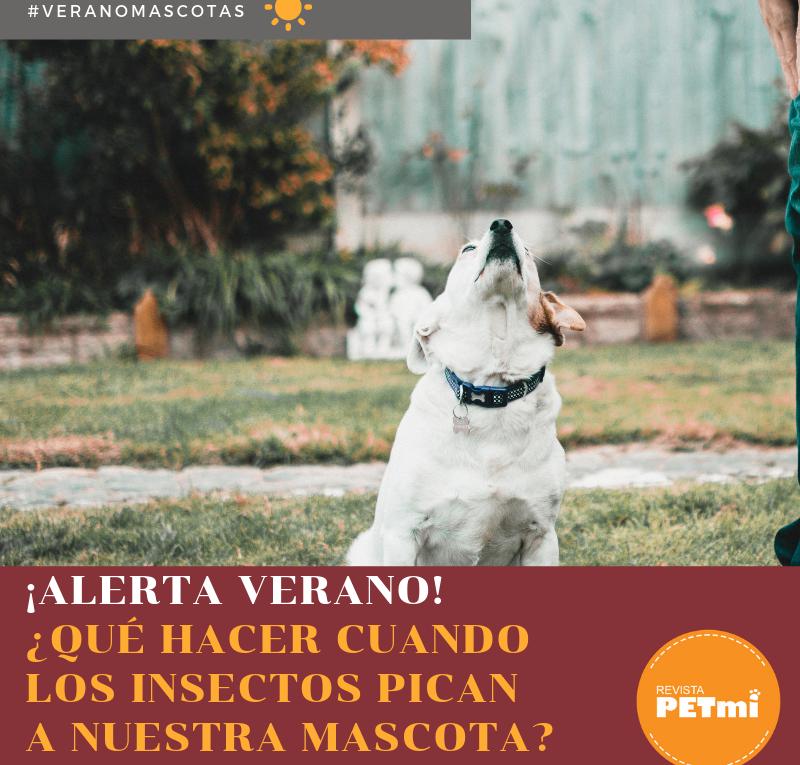 Alerta verano, Qué hacer cuando los insectos pican a nuestra mascota