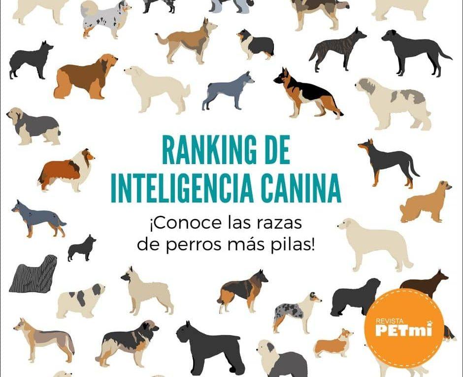 Ranking de Inteligencia canina_ (4)-min