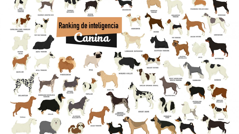 ranking de inteligencia canina