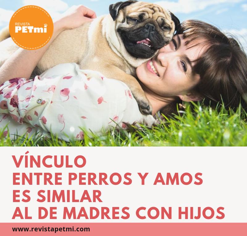 Vínculo entre perros y amos es similar al de madres con hijos