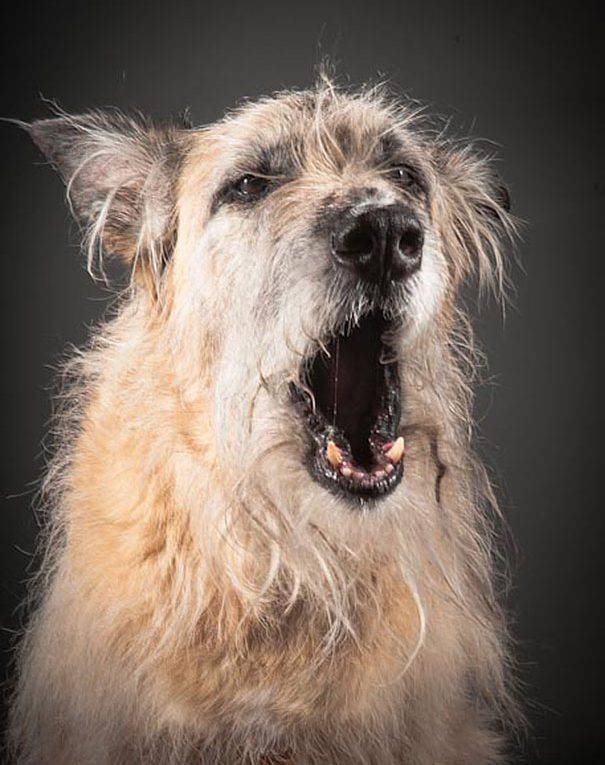 fotografías de perros ancianos