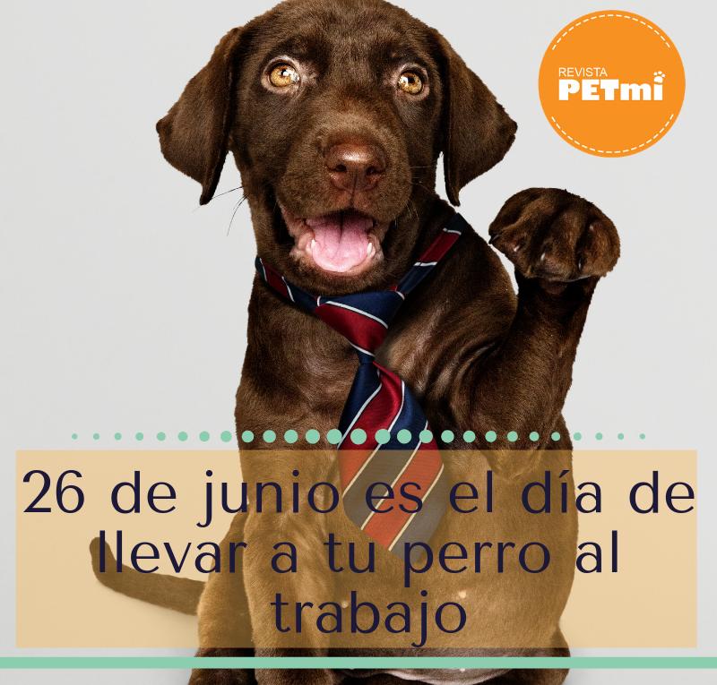 26 de junio es el día de llevar a tu perro al trabajo (2)