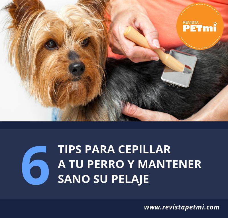 6 tips para cepillar a tu perro y mantener Sano su pelaje