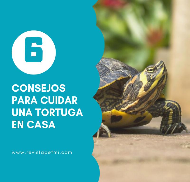 consejos para cuidar una tortuga en casa