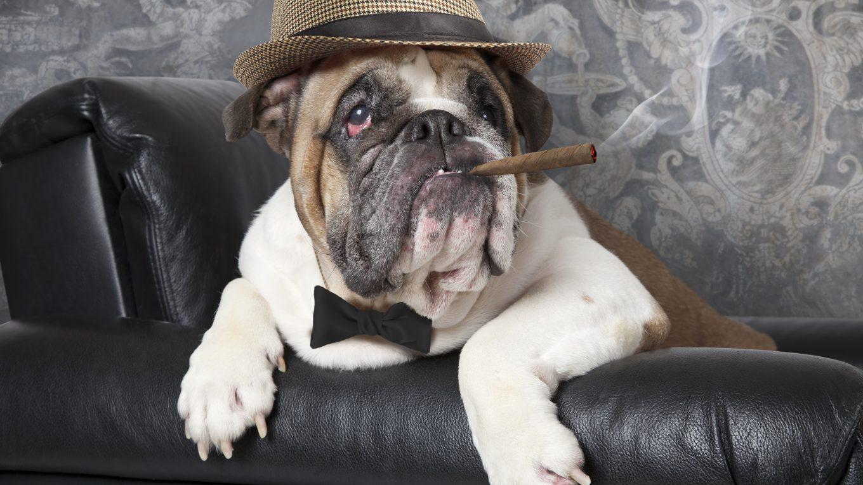 razones por las que el cigarrillo es dañino para las mascotas