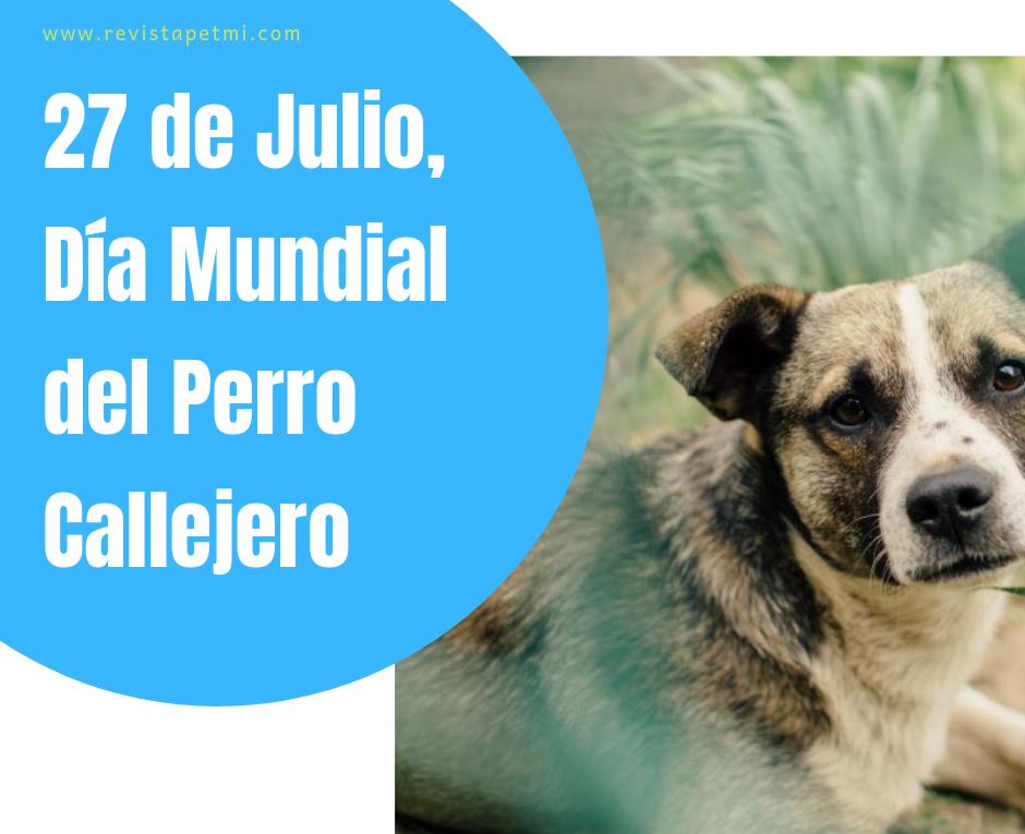 27 de junio día del perro callejero, seamos dueños responsables