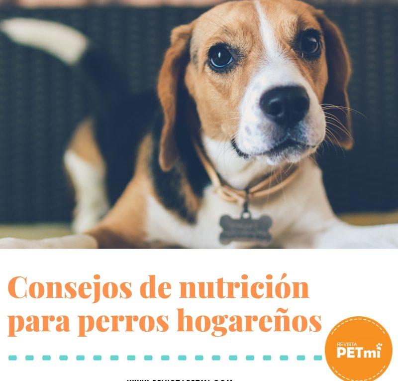 consejos para la nutrición de perros hogareños