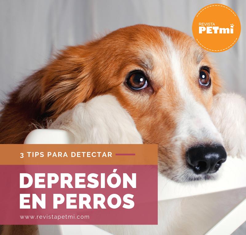 3 Tips para detectar la depresión en perros
