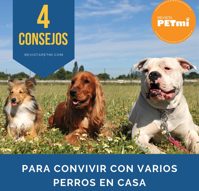 para convivir con varios perros en casa (2)