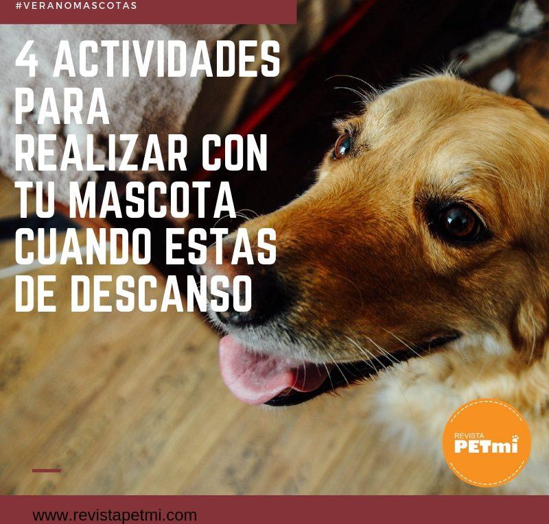 4 actividades para realizar con tu mascota cuando estas de descanso (4)