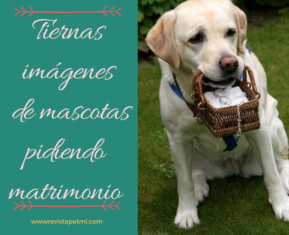Tiernas imágenes de mascotas pidiendo matrimonio