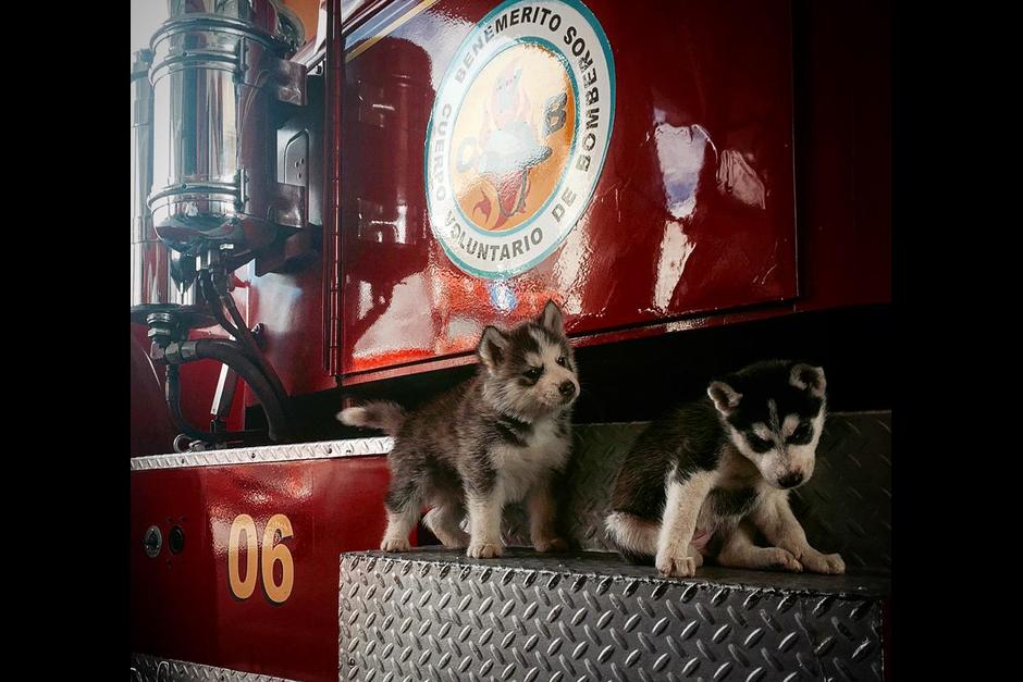 fuego y llama se unen a la unidad canina de Bomberos Voluntarios