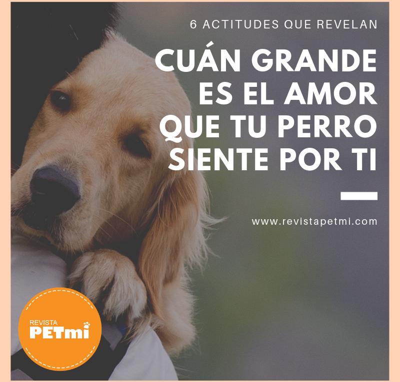 el amor que tu perro siente por ti (7)