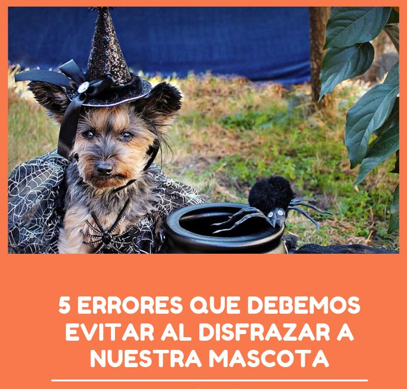 errores que no debes de conocer al disfrazar a tu perro