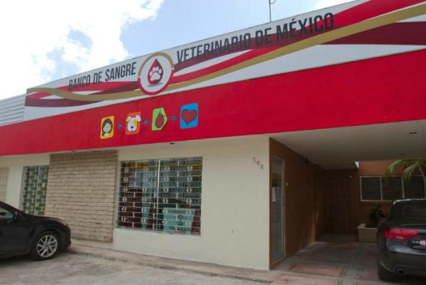 banco de sangre veterinario