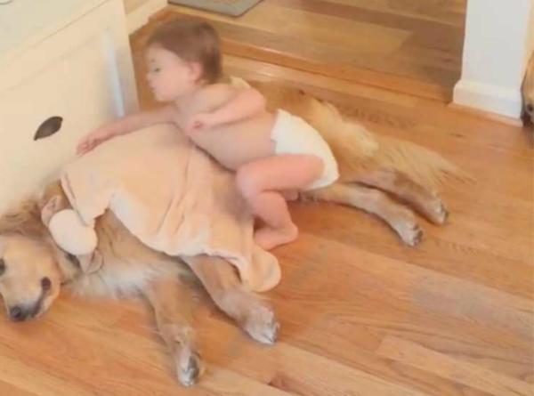 bebé tapa a sus mascotas