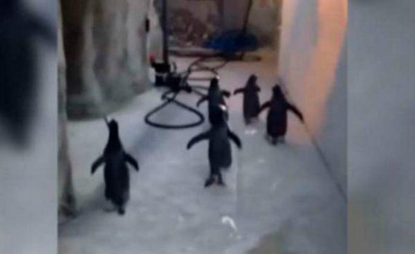 escape de pinguinos