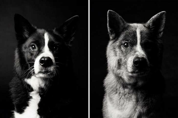 Cómo envejecen los perros