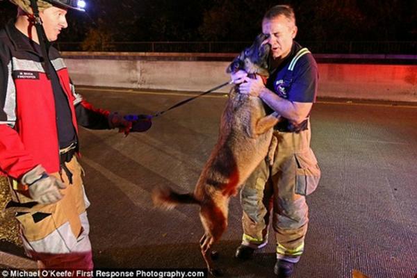 conmovedora reacción de un perro al ser rescatado