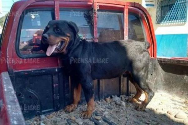 sacrificio de perro