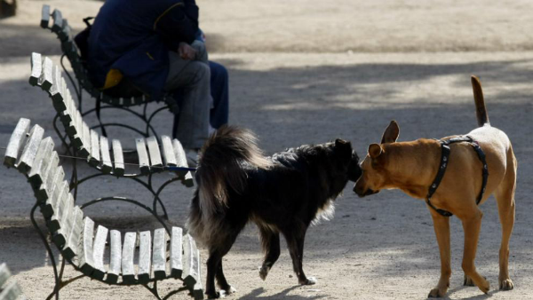 amarrar perros