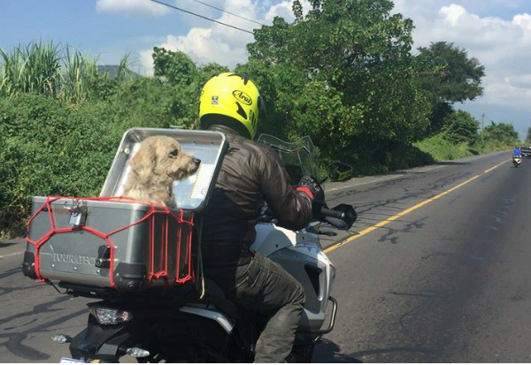 Arzú rescata perro