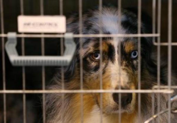 Chicago prohíbe venta de cachorros