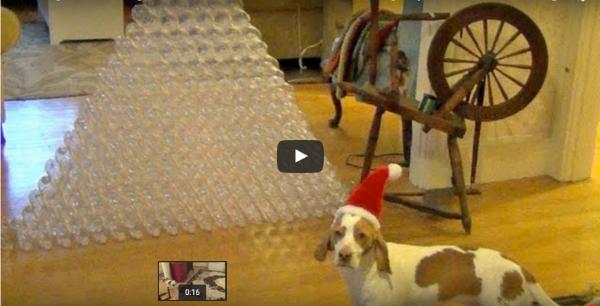Perro recibe montaña de botellas
