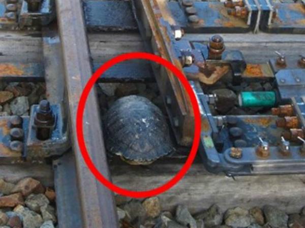 túneles para tortugas