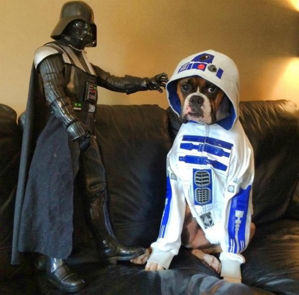 mascotas celebran el estreno de Star Wars