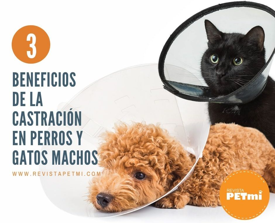 _castración en perros y gatos (2)