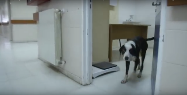Perro espera a su dueño fallecido