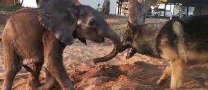 Elefante supera rechazo