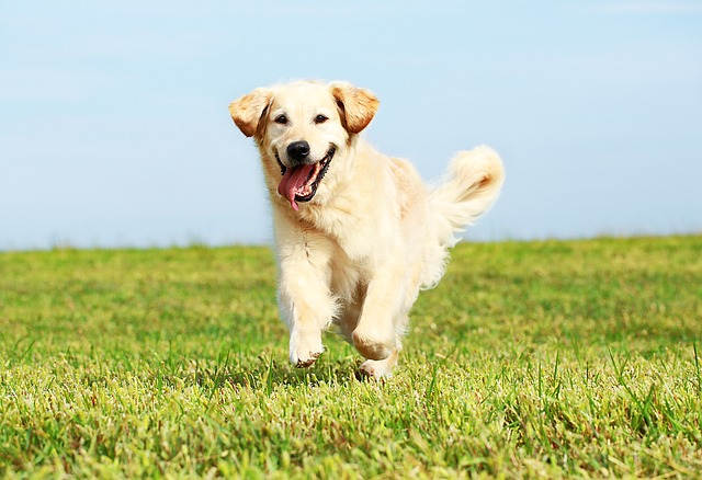 nombres populares de perro