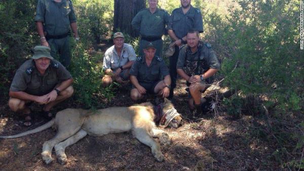Turistas ayudan a león