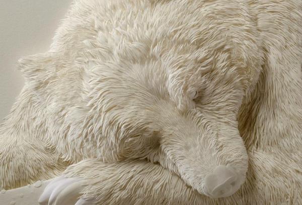 oso polar dormido
