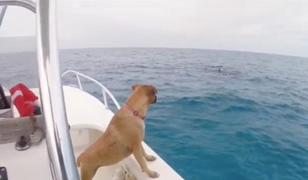 Perrita ve delfines