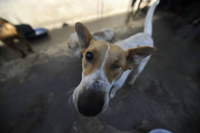 Bienestar animal en Guatemala