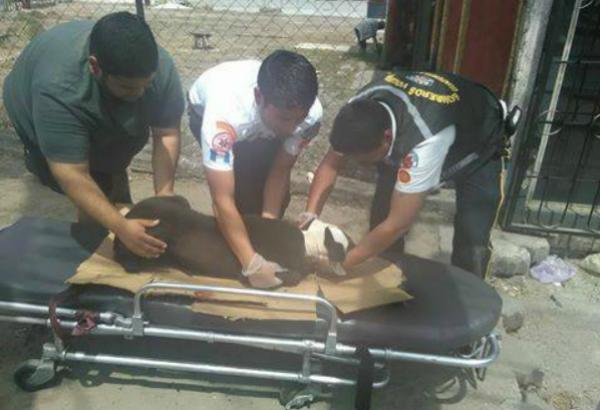 Bomberos Voluntarios rescatan perro