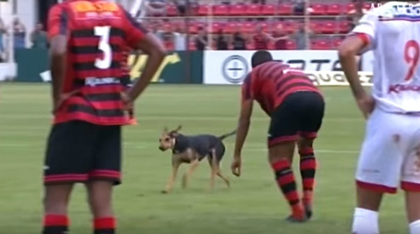 perro irrumpe en un partido