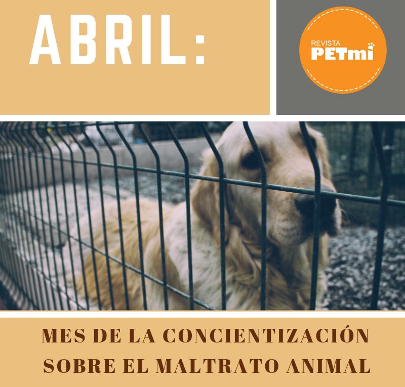 Abril: mes de concientización sobre el maltrato animal
