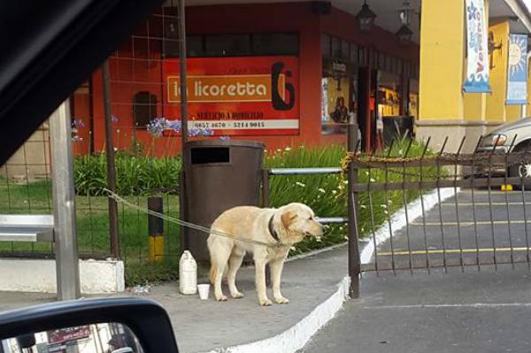 Abandono de perros