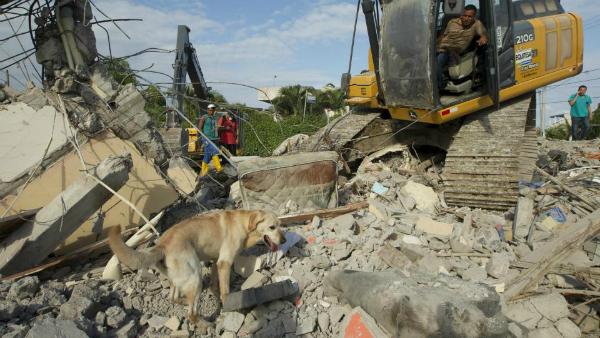 Ecuador rescatan a mascotas
