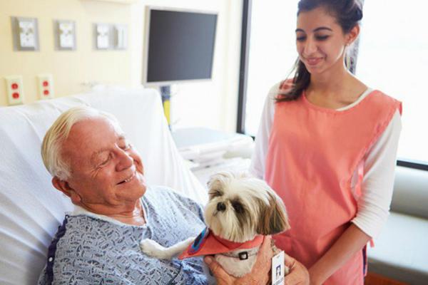 Hospital permite que mascotas