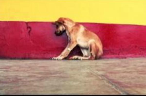 concientización sobre el maltrato animal